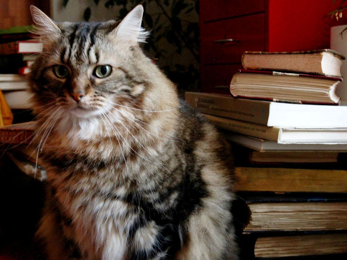 Le gardien de la librairie Zooka's Books !