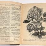 Catalogue n°80 de Soupert & Notting, rosiéristes à Luxembourg. Catalogue des rosiers nouveaux de 1886. Pages intérieures.