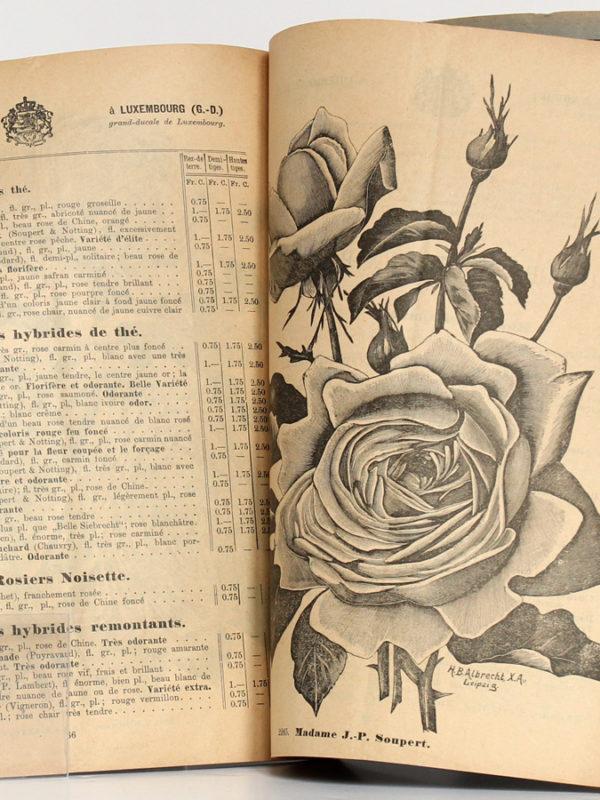 Catalogue n°124 de Soupert & Notting, rosiéristes à Luxembourg. Catalogue général 1905-1906. Pages intérieures.