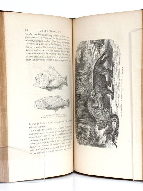 La Terre avant le déluge, Louis FIGUIER. Hachette, 1864. Pages intérieures.