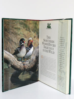 The Wood Duck and the Mandarin. The Northern Wood Ducks, Lawton L. Shurtleff, Christopher Savage. University of California Press, 1996. Pages intérieures.